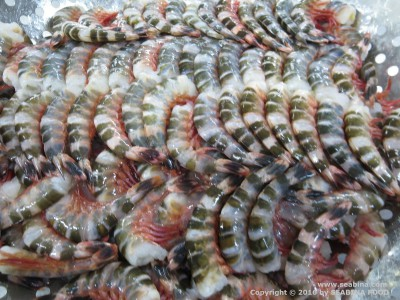 FROZEN RAW HLSO CAT TIGER PRAWN