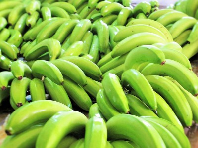 FRESH BANANA FRUIT